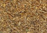 Зерно пшеничное